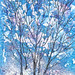 COLD, SNOW, & ICE TREES by Louise001