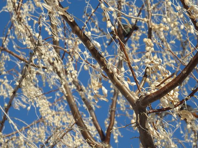 starling wadsworth