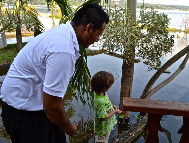 Feeding the fish - lake peten itza guatemala