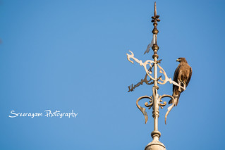 Eagle in Travancore Weather Vane, University College