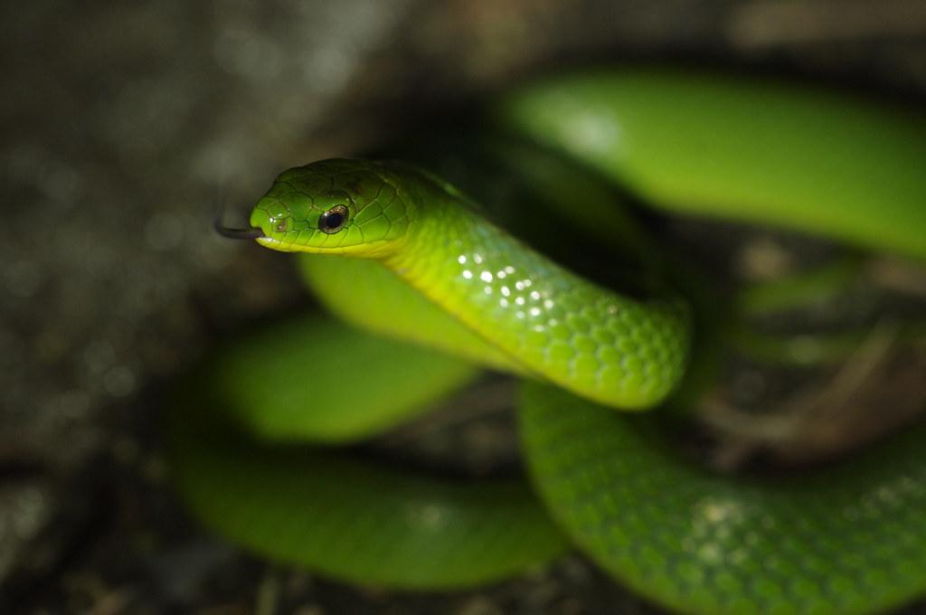 三芝入夜後的美麗生物-爬蟲篇