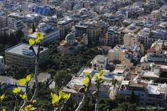 Athènes, Grèce (3)
