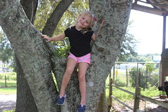 Isabella in a Tree