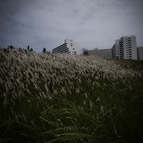 Riverside Waves of Weeds with Concrete Canyons