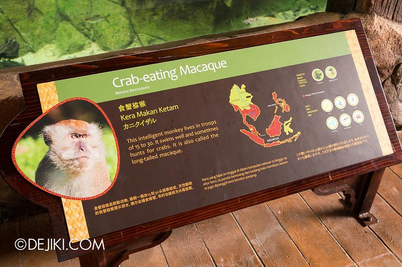 River Safari - Crab-eating Macaque