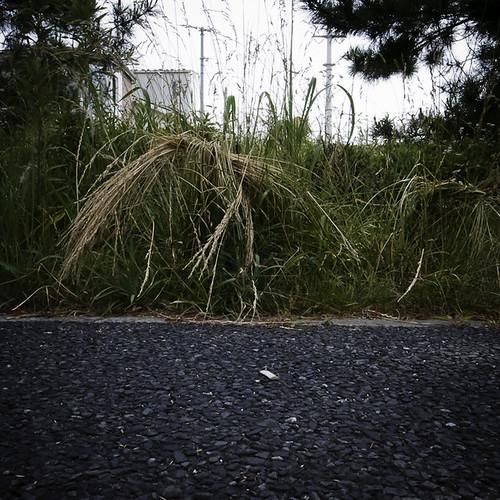 Weed Tying in Shin Urayasu