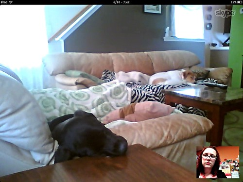 Skype with dogs