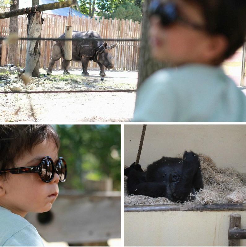 zoo_final1