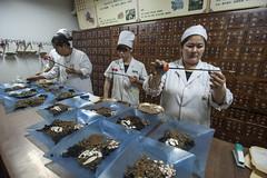 綠色和平針對中國幾個城市中藥材檢驗,7成樣本農業殘留。(圖片來源:台灣綠色和平組織)