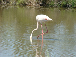 040 flamingo's