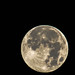 moon over Portland October 17th by SteveA07