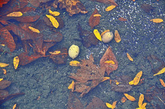 Allentown_pondleaves