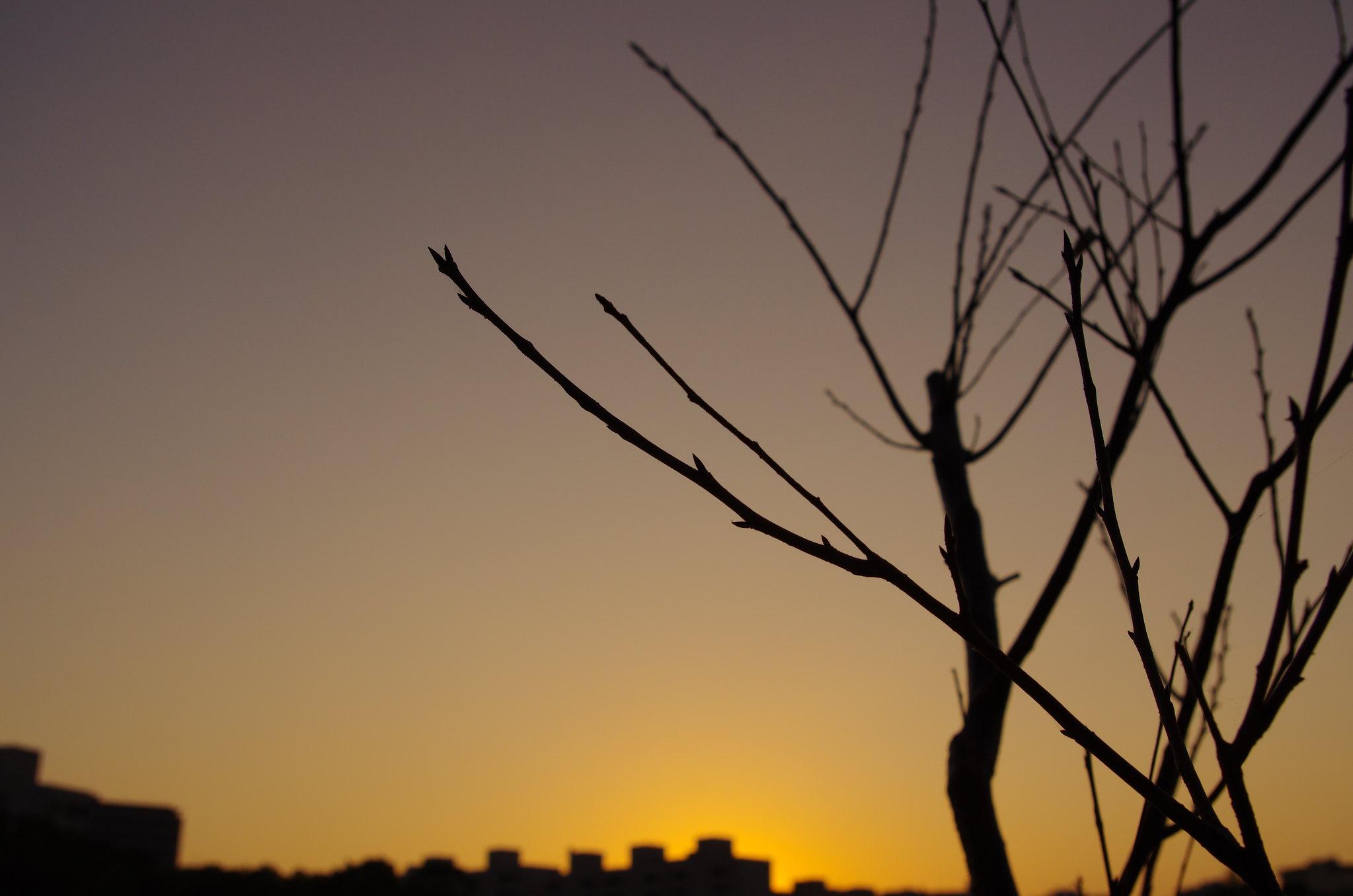 新月之晨語靜心之昏
