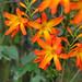 10-orange-yellow-DSC_3539