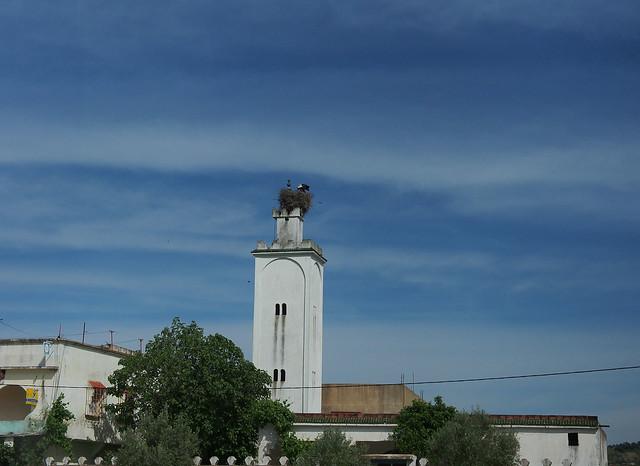 在宣禮塔上築巢的鸛鳥