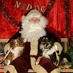 <p>Viva! Animal Rescue NM brought their Aussie Posse to pose with Santa!</p>