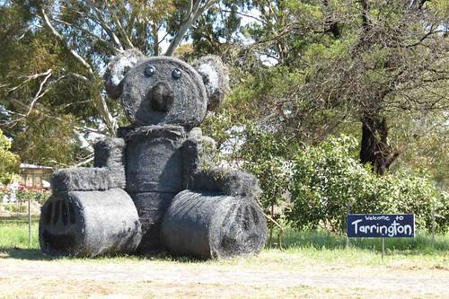 koala_2013