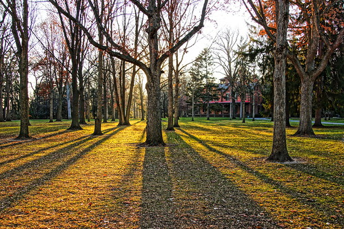 trees sunset shadow ohio fremont hdr longshadow spiegelgrove fremontohio rutherfordbhayes presidenthayes sanduskycountyohio sonyslta65v 19thuspresident 19thuspresidentrutherfordbhayes