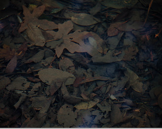 The Underworld: Leaves in a Streambed