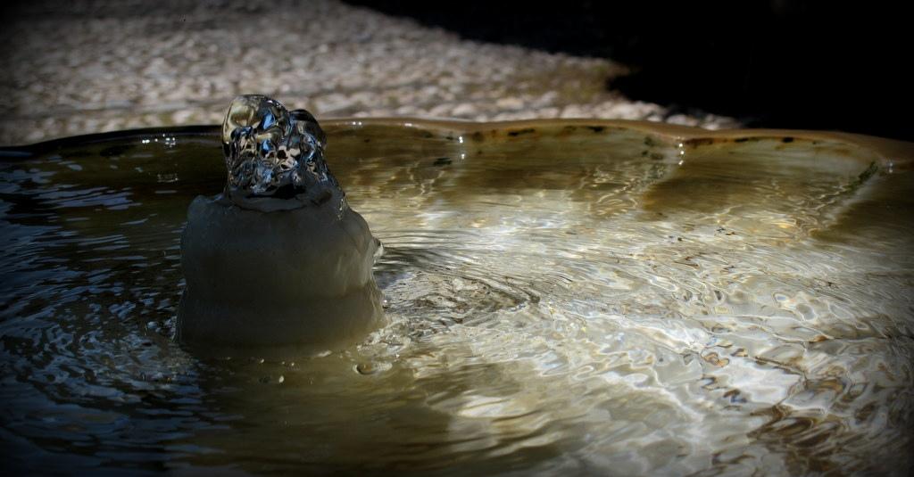 11. Agua y magia en el Generalife. Autor, Landahlauts