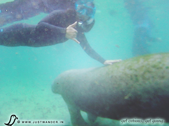 PIC: Captain Wayne White - Private Manatee Tour - Three Sisters Springs, Crystal River, Florida