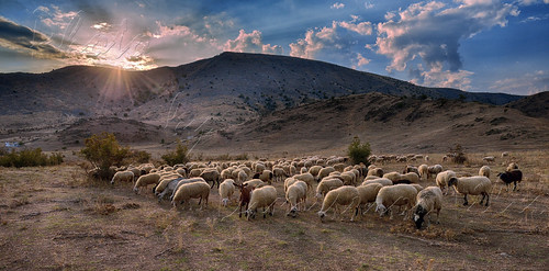 sunset nature animals landscapes greece zarko d4 trikala thessalia fantasticnature naturallife παράδοση coth5