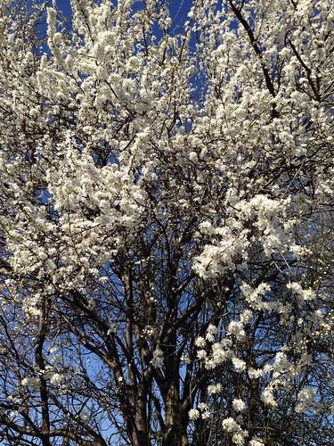 Blütenpracht zum Frühlingsanfang