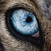 "Stunning ""9:365"" macro shot by Keith Johnston (keithj5000 on Flickr) captures eye details of a husky dog. by Flickr"