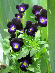 Flower Garden at Olana