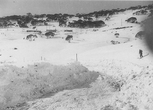 Herringbone up Mt Perisher. 2nd half 1940s.