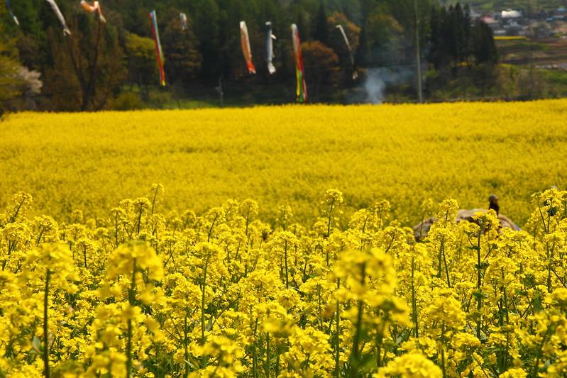IMG_7921_2013 Nagano Trip