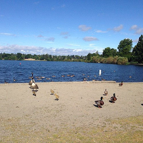 Greenlake Ducks #nofilter