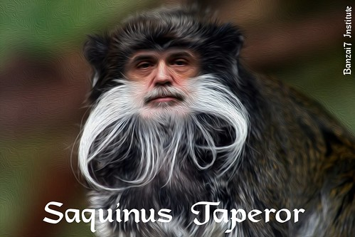 SAGUINUS TAPEROR by WilliamBanzai7/Colonel Flick