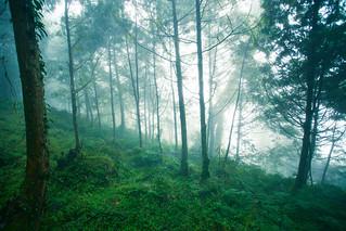 霧中的坡地-1226.jpg