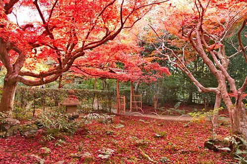 【写真】2012 紅葉 : 厭離庵/2020-10-15/IMGP7832