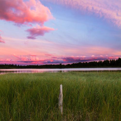 pink sunset lake grass day skies cloudy treestump buskerud såtefjell midtredjupetjørn
