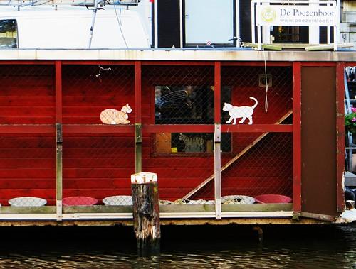 stray-cat-asylum-boat by Frizztext