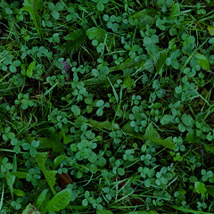 annual plant, shrub, leaf, grass, plant, herb, flora, green, produce, groundcover,