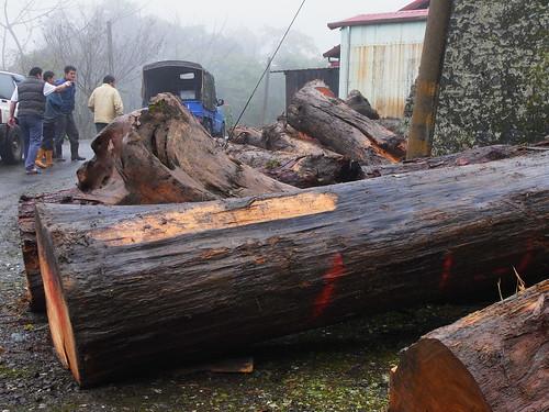 將遭遇下山木材