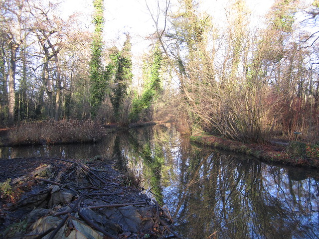 Fairhaven Woodland and Water garden Jan 2014 006