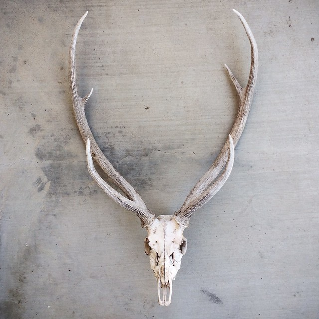 axis skull