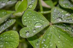 Leaf Waterdrop