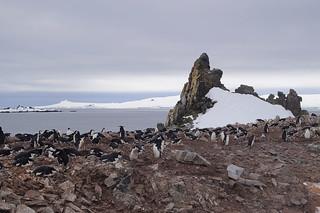 084 Wandeling Halfmoon Island - kinbandpinguins