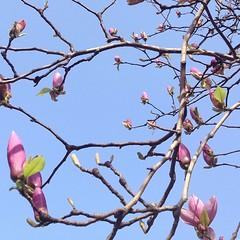 plant(0.0), blossom(1.0), flower(1.0), branch(1.0), magnolia(1.0), flora(1.0), cherry blossom(1.0), spring(1.0), petal(1.0), twig(1.0),