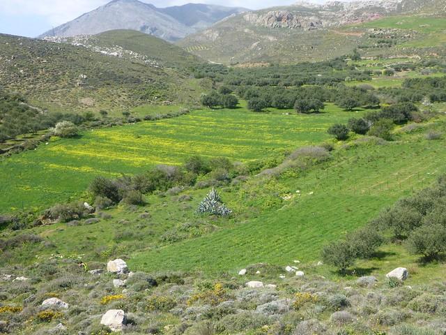 culture dans les montagne d'asterousias