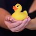 Rubber Duck by Derek Licek's Photography