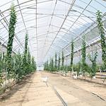 長畠農園風景4