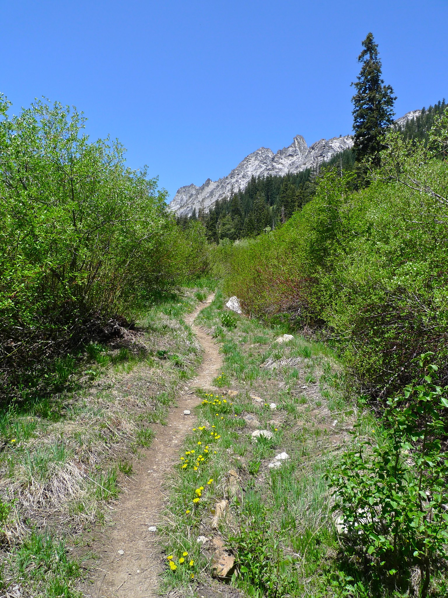 The trail exits the forest and the views begin to open up to Gibson peak