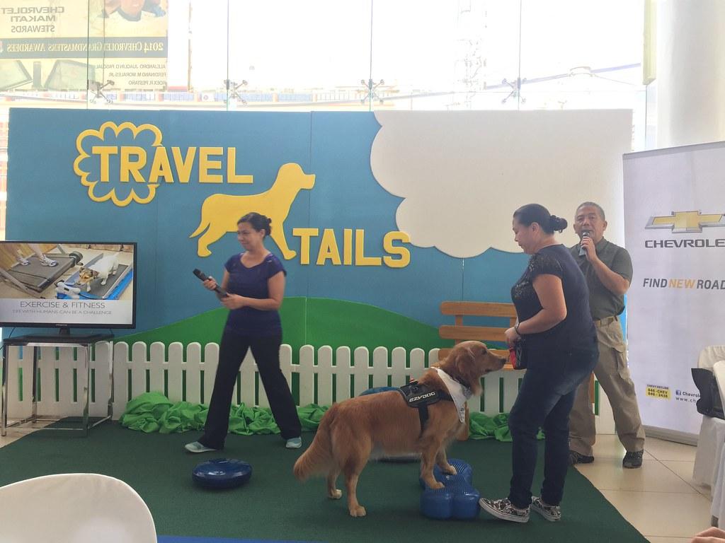 better-dogs-training-school