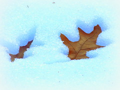 Snow Thaws Copying Leaves Contour